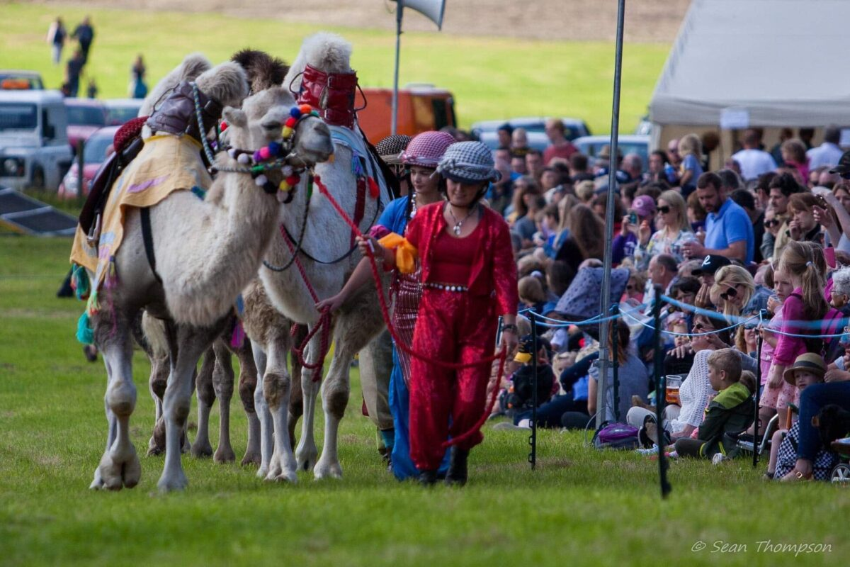 Camel racing pulled in the crowds to Llangollen